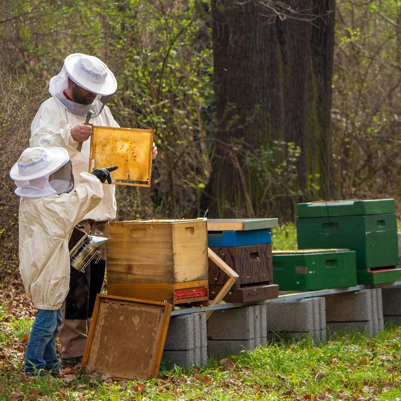 Imkerei Webers Honigtopf im Einsatz